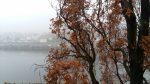 Herbstnebel | 24.11.2016