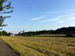 Wiese am Elberadweg mit Blick zur Burg | 18.07.2017