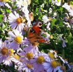 Schmetterling | 15.10.2017